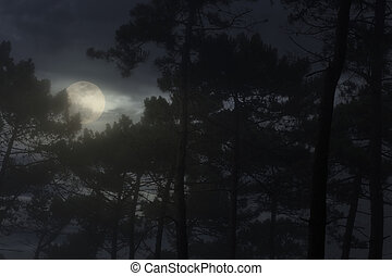 Full moon rising over a misty pine forest at night