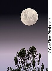 Full Moon - Full moon and trees in the foreground