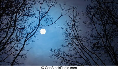 full moon / Time Lapse