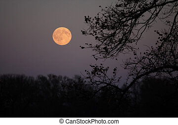 Full moon viewed through the tree branches