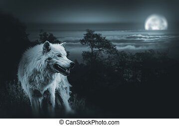 Full Moon Wolf Hunt - Wolf the King of Wilderness. White...