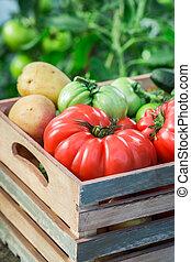 Full of vitamins vegetables in greenhouse