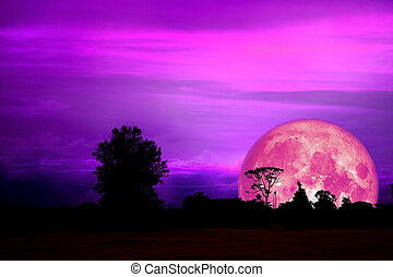 full pink moon back over silhouette branch tree in field on evening sky