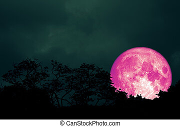 full pink moon back silhouette leaves on tree in night sky