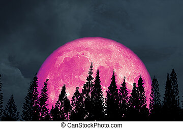 full pink moon back silhouette pine in night sky