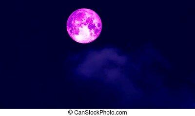 full pink moon moving pass back cloud on dark night sky