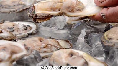 full plate of oysters