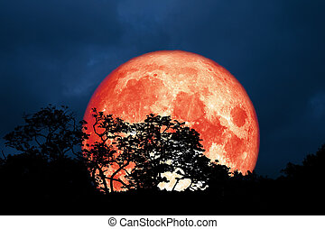 full red moon back silhouette leaves on tree in night sky