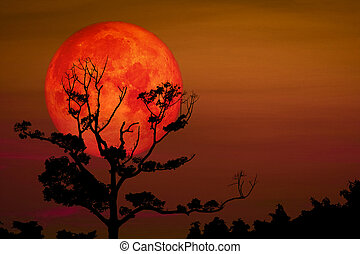 Full Sprouting Grass Moon back on silhouette dry branch tree on night sky