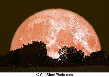 full Thunder moon on night sky back over silhouette forest