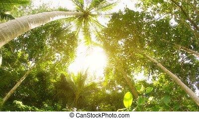 The tops of tropical trees. Thailand, Phuket Island