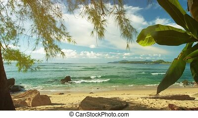 Plants on the shore of a tropical sea. Beautiful exotic landscape. Phuket Island, Thailand