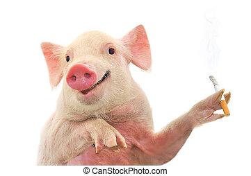 fumar, cerdo, cigarrillo