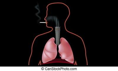 fumer, poumons, effet, hd