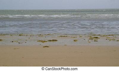 Fun At Sandy Coral Beach, Lady Elliot Island