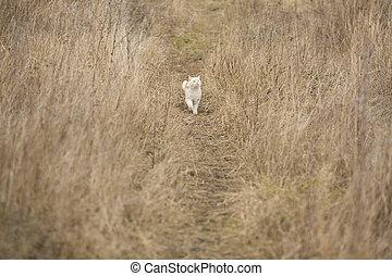 Fun Cat Walks