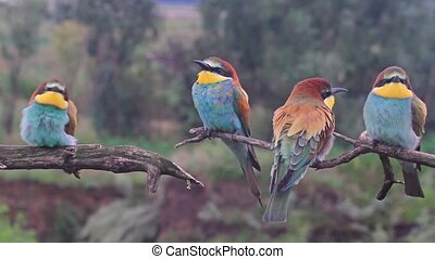 fun exotic colored birds sitting on a branch , wildlife and beautiful colors