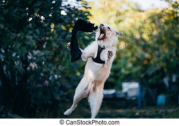fun white Irish Wolfhound jump in nature.