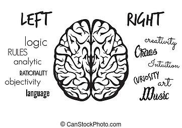 función, cerebro