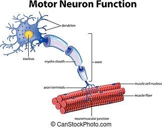 functie, neuron, motor, vector