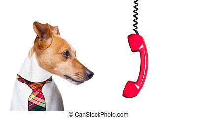 fundición, trabajo, perro