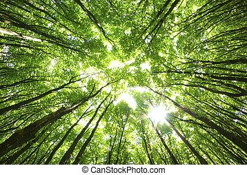 fundo, árvores