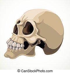 fundo branco, isolado, cranio