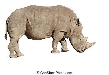 fundo branco, rinoceronte