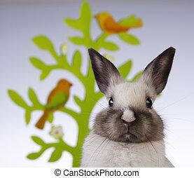 fundo, coelhinho, coelho, branca