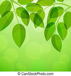 fundo, com, foliage
