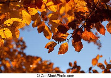 fundo, com, outono sai