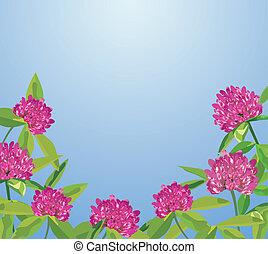 fundo, com, trevo, flores