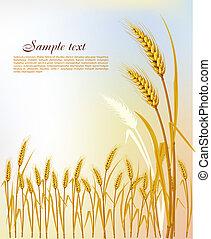fundo, com, trigo