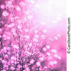 fundo, com, verão, flores