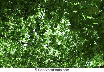 fundo, com, verde sai, de, árvores