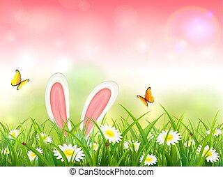 fundo cor-de-rosa, natureza, coelho, capim, orelhas