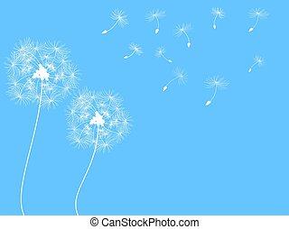 fundo, dandelion
