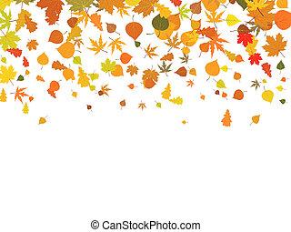 fundo, de, outono, leaves.