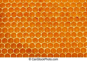 fundo, favo mel