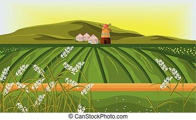 fundo, fazenda, campos, sol, vector., ilustrações, arroz, paisagem