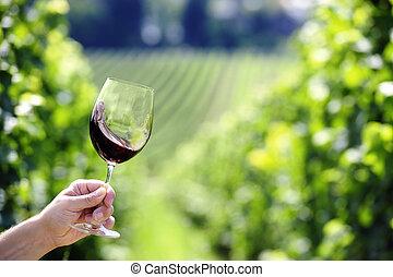 fundo, girar um eixo, vinhedo, vidro, vinho tinto