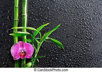 fundo, -, gotas, spa, orquídea