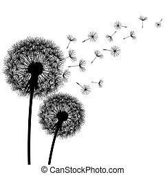 fundo, silueta, natureza, dandelion