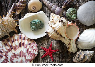 fundo, starfish, madeira, foco, seletivo, lote, seashells