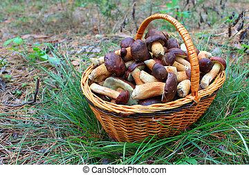 funghi,  bas, foresta