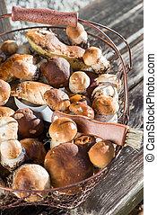 funghi, commestibile