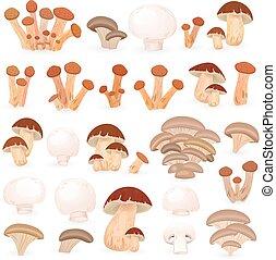 funghi, disegno, tuo, collezione