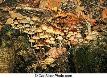 funghi, foresta, lotto