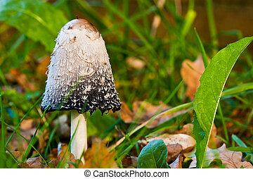funghi, funghi, foresta