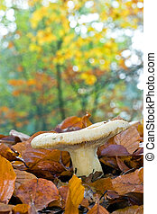 funghi, funghi, in, uno, foresta